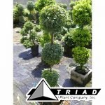 10-inch-eugenia-3-ball-topiary