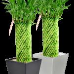 6-inch-tornado-bamboo-w-odessa-ceramic