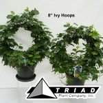 8-inch-ivy-hoops
