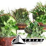 assorted-dishgarden-baskets