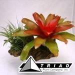 bromeliad-planter-medium