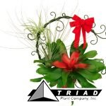 bromeliad-christmas-metal-wreath