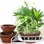 conical-wooden-bowl-planter