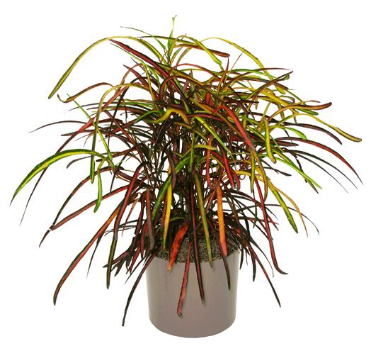 Croton Triad Plant Company Inc