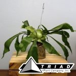 hanging-bamboo-planter-staghorn1