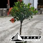 ixora-maui-braid