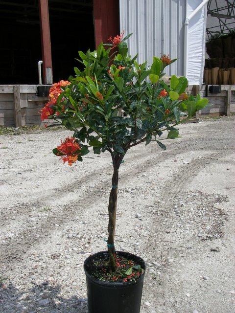 Flowering Tropicals Triad Plant Company Inc