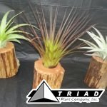 small-tillandsia-upright-planter
