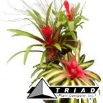 bromeliad-planter-super