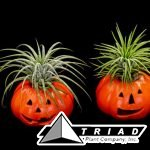 ceramic-pumpkin-with-tillandsia