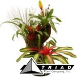 fancy-bromeliad-planter