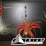 tillandsia-hanging_crystals